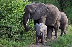 5_elefanten_queen-_elisabeth-1.jpg