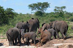 12_rundreise_uganda_21_tage_elefanten.jpg