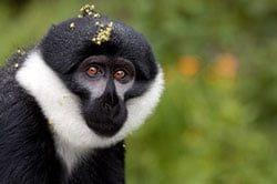 18_rundreise_uganda_21_tage_lake_mutanda_affe.jpg