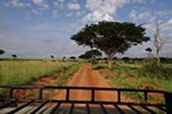 2_rundreise_uganda_21_tage_Safari.jpg