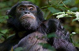 3_schimpansen_trekking-1.jpg