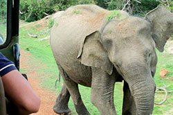 Srilanka_travel_partner_yala-3348