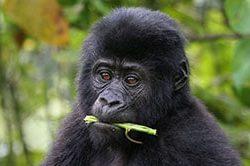 Tag_11_Gorilla_Trekking_IMG_9470.jpg
