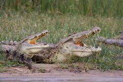 Tag_2_Krokodile_IMG_0901.jpg