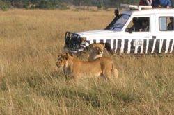 erlebnisreise_safari-14.jpg