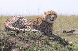 erlebnisreise_tansania-15.jpg