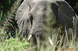 erlebnisreise_uganda-12.jpg