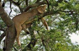 safari_tansania-6.jpg